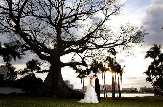 A bride and groom kiss underneath the historic Kapoch tree in Palm Beach.